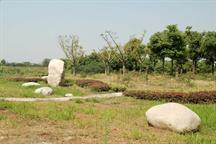 新农村绿化